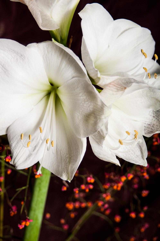 Blüten und Vergänglichkeit