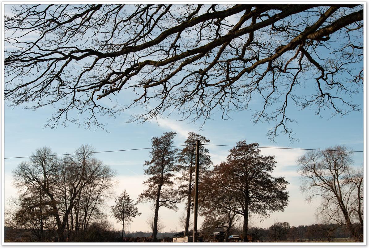 blattlose Eichenäste vor Bäumen