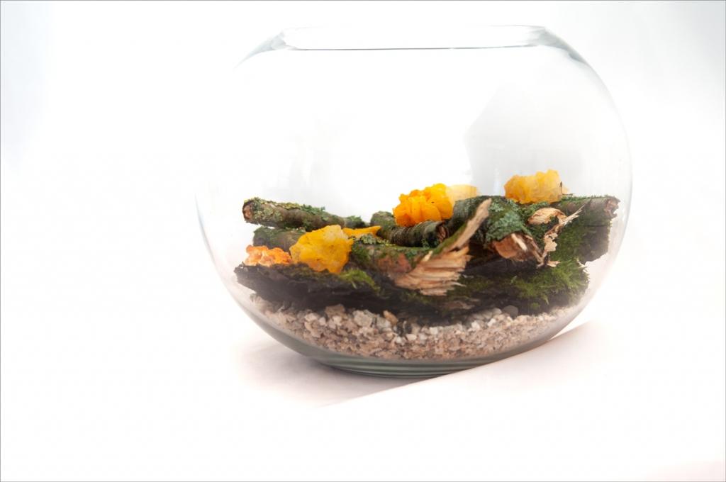 Äste, Flechten und Pilze in einem Glas